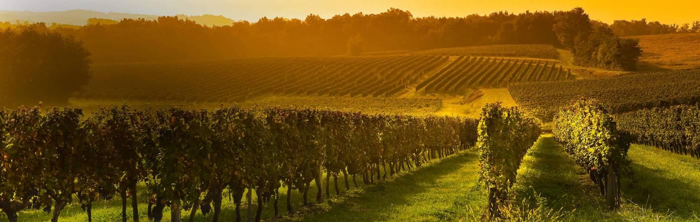 Wein – Für genussvolle Momente